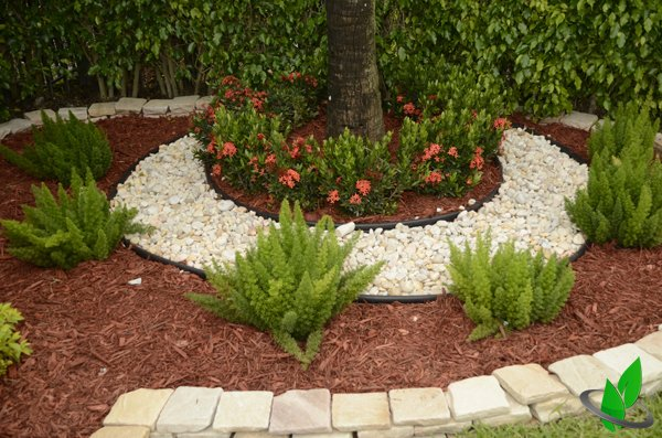 Tree Flower Bed : ... to how the Ixora highlights the Palm Tree previously lifeless